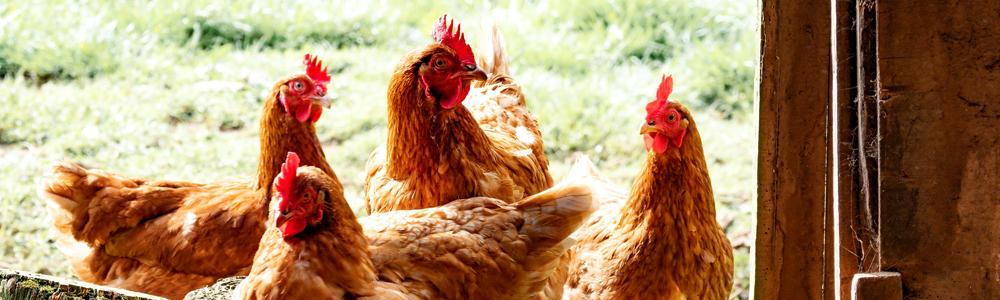 zinc oxide animal nutrition